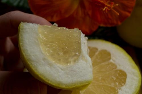 how-to-cut-a-grapefruit-5